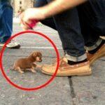 Le 10 Razze Canine più Piccole del Mondo